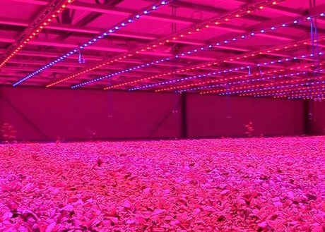 how to grow weed inside without lights