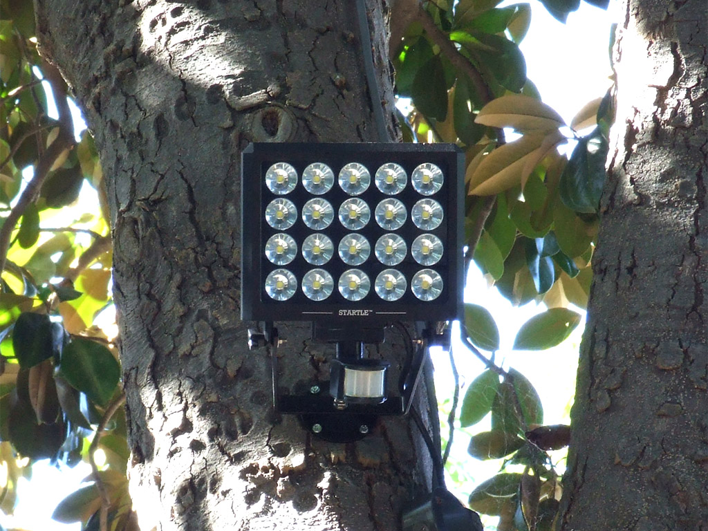 Global security experts announces new led outdoor security light global security experts startle high intensity led security light installed on a tree ledinside global security experts mozeypictures Images