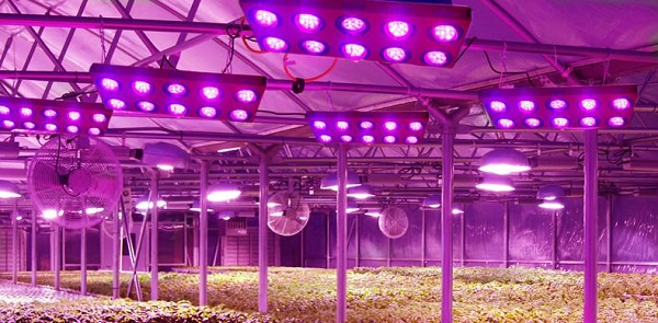 World Largest Led Plant Grow Factory Built In Japan
