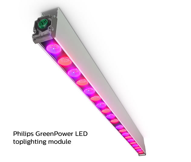 U S Grower Accelerates Rooting Of Plants With Philips Led