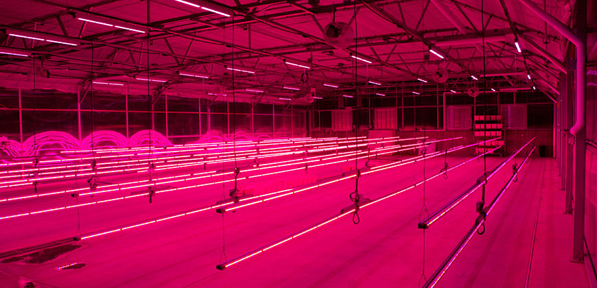 Philips And Colorado State University Seal Led Grow Light