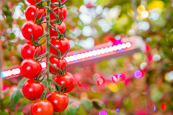 Le Jardin De Rabelais Partners Philips Lighting For All Year