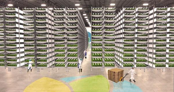 AeroFarms在美建最大垂直農場