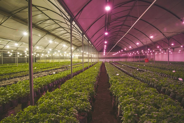 Philips Lighting Launches Next Generation Led Grow Lamps