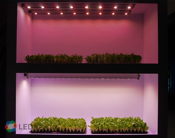 Heliospectra Supplies Led Grow Lights For Greenhouses In Uk